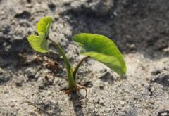 Как растет трава в земле