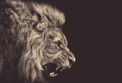 1920x1080, Злой и страшный лев