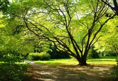 Большое красивое дерево в лесу