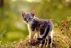 Крохотный котенок на фоне леса 1920x1080