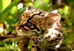 1920x1200 Маленький леопард в лесу