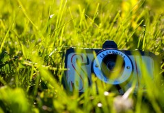 1920x1200, камера, зеленая трава