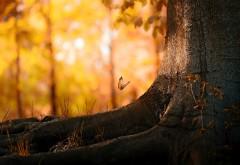 1920x1200, Бабочка в лесу