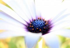 2560x1600, макро обои белого цветка