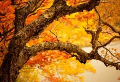 1920x1200, дерево, пора года, осень, желтая листва, дождь