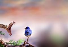 картинки на рабочий стол 1920x1200 макро птица