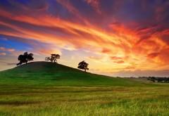 1920x1200, сша, калифорния, природа, лето, закат, деревья
