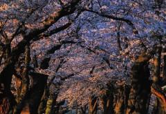 2560x1600, Нежная весенняя обойка с деревьями
