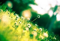 2560x1600, Полевые цветы на зеленой лужайке