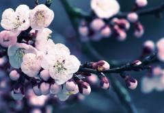 2560x1600, Макро фото цветков персика