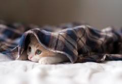 Котенок под одеялом смешные обои на рабочий стол