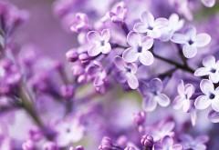 Весенние цветы макро обои