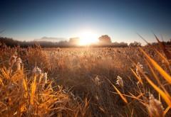 1920x1080, Солнце, поле, колоски и лето