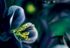 Летний цветок на рабочий стол макро картинки