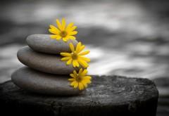 Абстрактные обои камней
