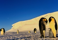 Фото семьи пнгвинов