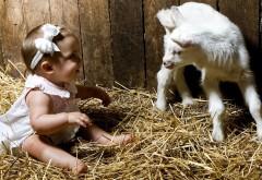 Маленькая девочка с козленком в хлеву