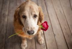 Добрая собакая с цветком в зубах