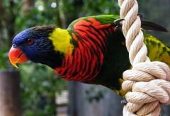 Тропические попугаи фото