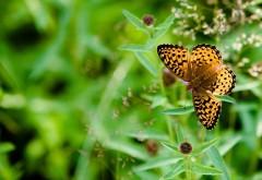 Бабочка красивые заставки
