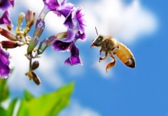 Красивые заставки с пчёлами