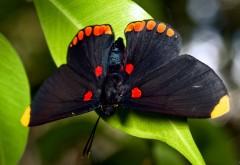 Макро обои с бабочками