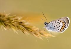 Фотографии бабочек на заставку