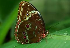 Макро фото бабочки с глазками на крыльях