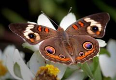 Большая-большая бабочка фото