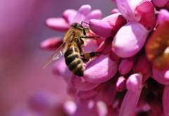 Обои с пчёлами на цветке