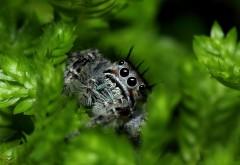 Макро фото серого паучка