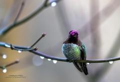 Яркая птица на рабочий стол