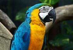 Заставки на рабочий стол попугай