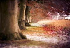 Осень, лес, природа, поле, заставки