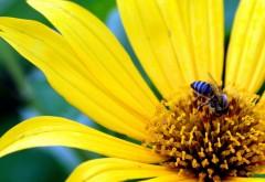 Фото цветов высокого качества