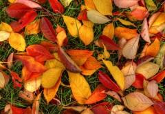 Желтые листья на траве скачать обои на рабочий стол