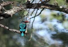 Красивая птичка, природа, заставки