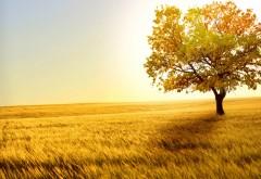 Природа, дерево, солнце, осень, поле, заставки