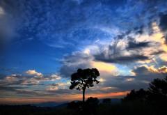 Картинки природы красивые скачать бесплатно