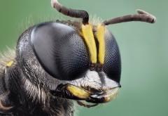 Макро фото мухи