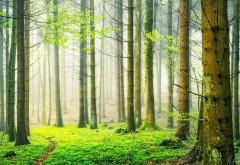 Лес картинки