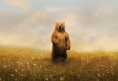 Рисованный медведь обои на рабочий стол
