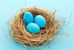 Голубые яйца в гнезде пасхальные яйца обои