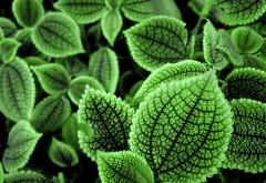 Красивый зеленый кактус заставки