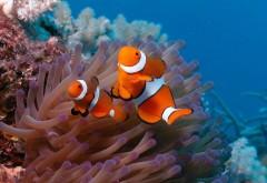 Рыбка, клоун, рифы заставки