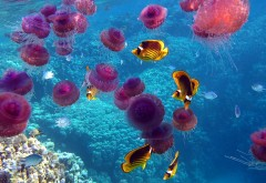 Рифы, медузы, рыбки, кораллы фото