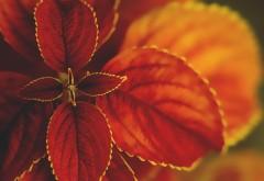 Макро обои цветка природа широкоформатные картинки