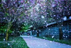 Mississauga kariya park canada wallpapers high resolution hd