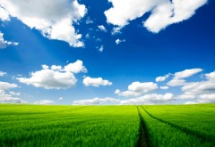 Nature green grass traces wallpapers high resolution