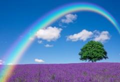 Радуга на цветочном поле фото